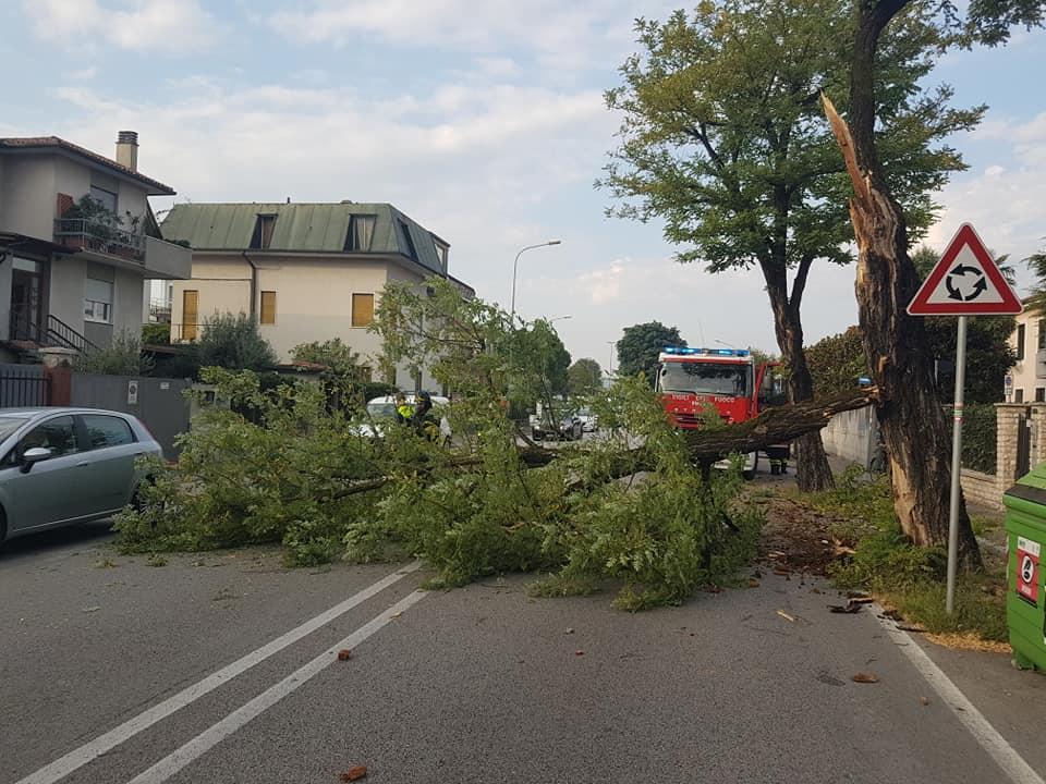 Abbatte pianta in viale Dal Verme, poi fugge: pesanti disagi al traffico
