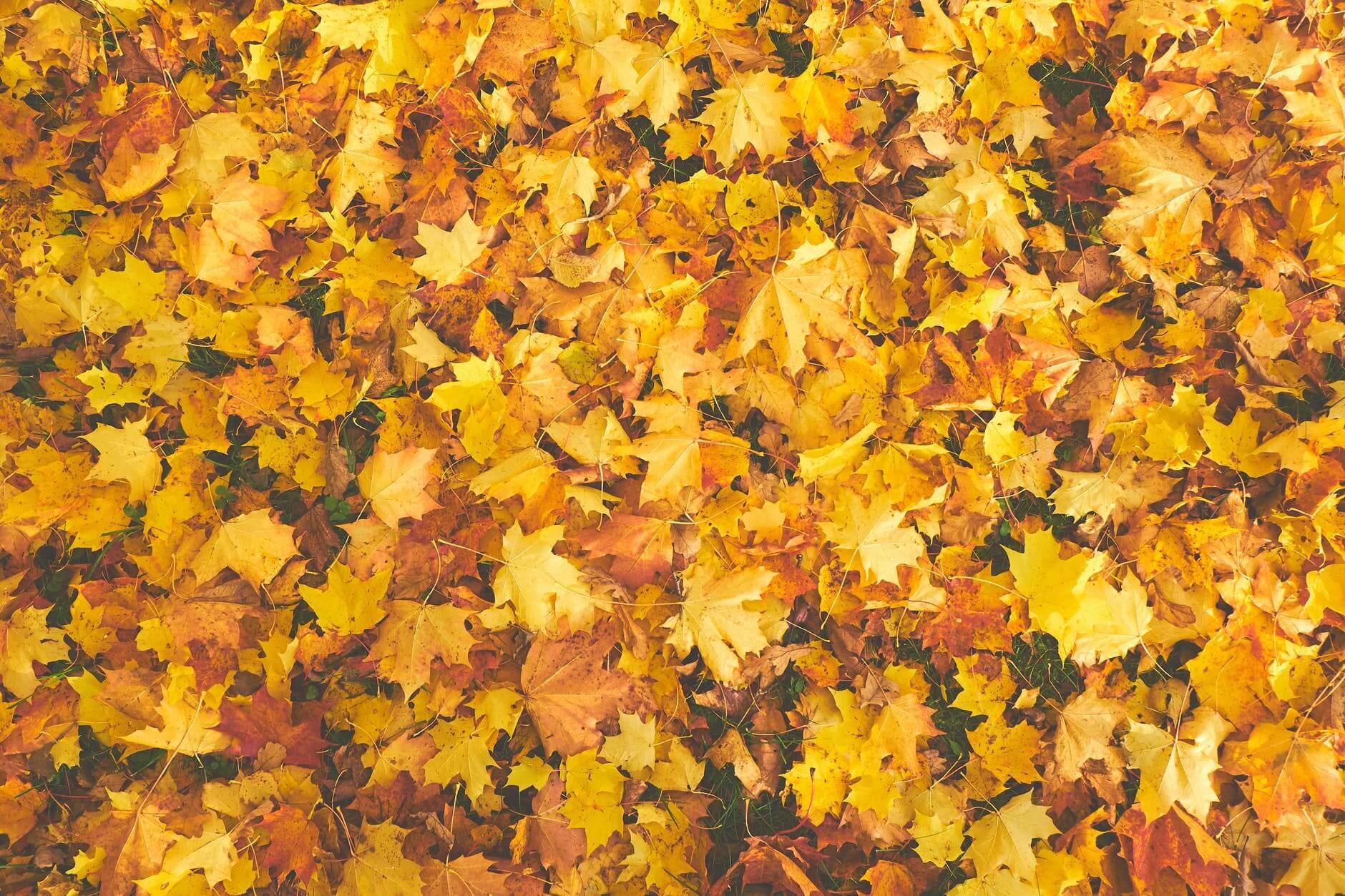 Passaggio A Nord Foliage L Autunno E La Magia Dei Colori