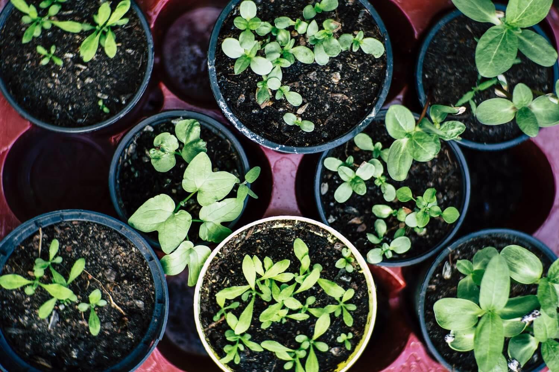 Come Coltivare Pomodori Sul Balcone passaggio a nord - orto sul balcone di casa: come coltivare